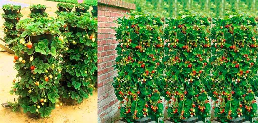 Как красиво посадить клубнику фото.